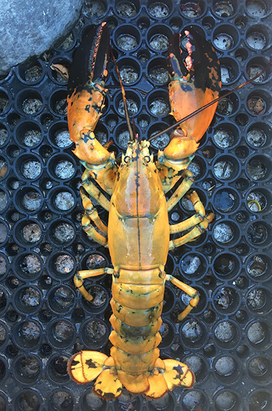 Maine Lobster Fishing 101 | The Maine Lobster Lady